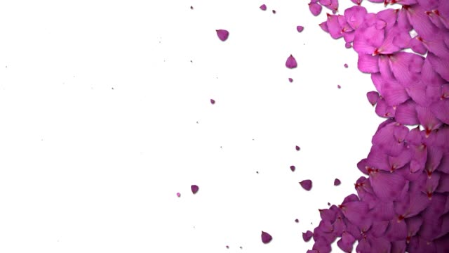 animated rose petals transition video