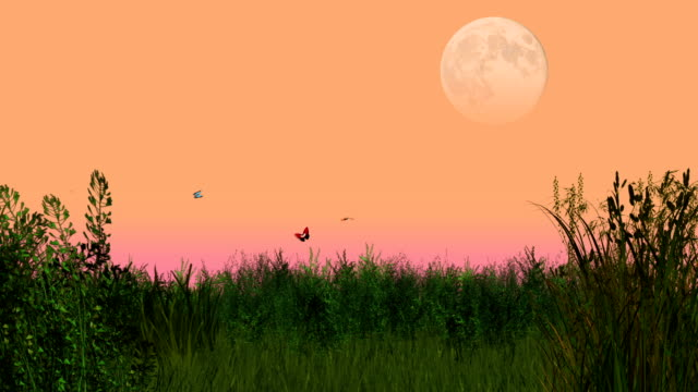 Animated summer evening meadow with flying butterflies video