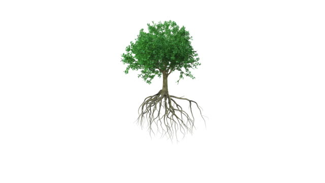 Animation around a colored growing tree with roots