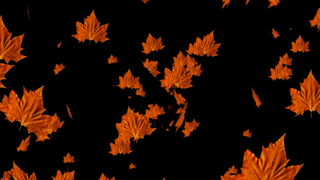 Animation bright autumn leaves video