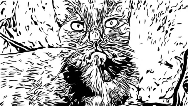 stockvideo's en b-roll-footage met animatie tekenfilm, zwarte kat - sleeping illustration