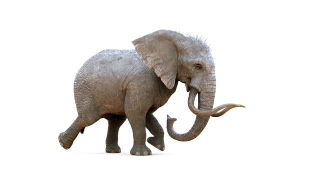 Animation Elephant Walking Loopable with Alpha Mark.
