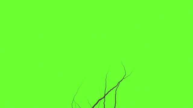 애니메이션-아이비 녹색 화면에 성장 - 아이비 스톡 비디오 및 b-롤 화면