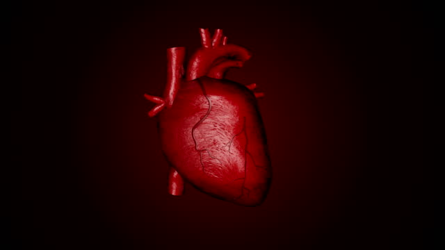 3D animation of a beating human heart 3D animation of a beating human heart heart internal organ stock videos & royalty-free footage
