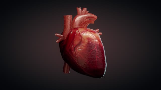 3D animation of a beating human heart 3D animation of a beating human heart pulse trace stock videos & royalty-free footage