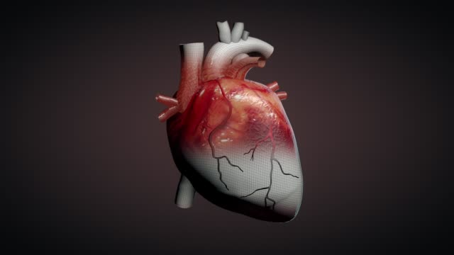 3d animation of a beating human heart - cuore umano video stock e b–roll