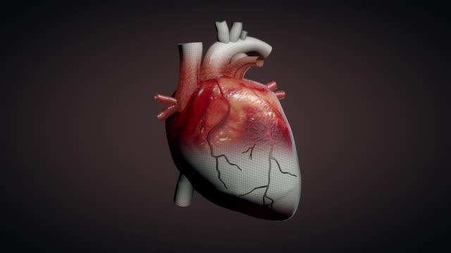 3d animation of a beating human heart - serce człowieka filmów i materiałów b-roll