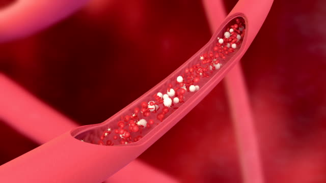 3D animation of a bloodstream with red cell white cell and platelet 3D animation of a bloodstream with red cell white cell and platelet blood vessel stock videos & royalty-free footage