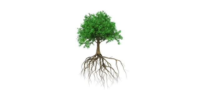 Animation of a colored growing tree with roots