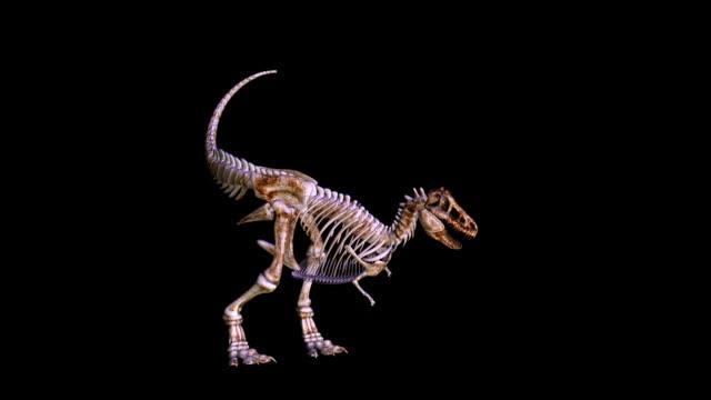 恐竜の 3 d アニメーション - 恐竜点の映像素材/bロール