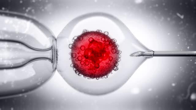 3d-animering av en dna-fylld vätska som injiceras i en äggcell kärna - injektionsspruta bildbanksvideor och videomaterial från bakom kulisserna