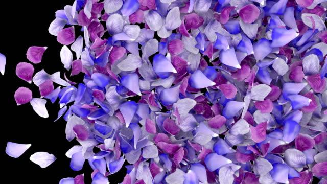 l'animazione 3d di petali di fiori scorre con strato alfa - petalo video stock e b–roll