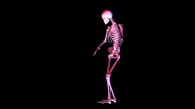 Animation of a posing Skeleton Animation of a posing Skeleton animal skeleton stock videos & royalty-free footage