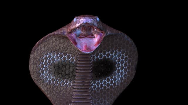 3D Animation of a Snake video