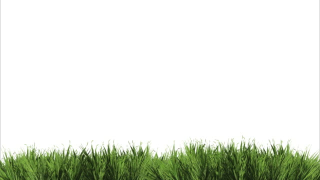 animation of a very real grass in the wind on a white background - grass isolated video stock e b–roll