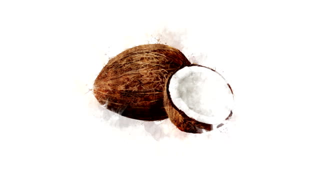 Animation of Coconut A hand-drawn watercolor Coconut appears with animation on a background. Convenient and easy to use for installation. coconut stock videos & royalty-free footage