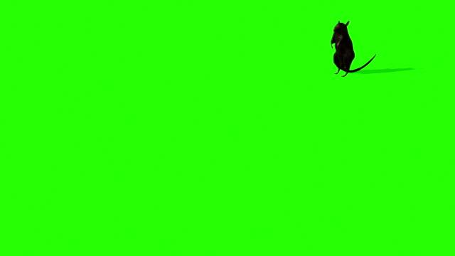 animazione di simpatico topo grigio sullo schermo verde - mouse video stock e b–roll