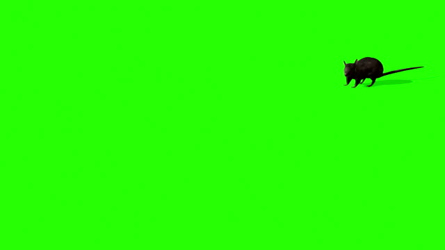 animation of cute gray rat on green screen