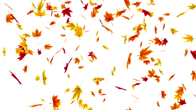 Animation of falling autumn leaves Animation of falling autumn leaves maple leaf videos stock videos & royalty-free footage