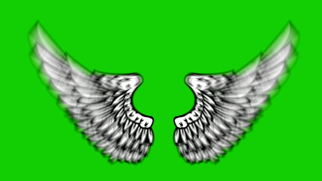 animation of flying wings on green background. angel wings animation. - angelo video stock e b–roll