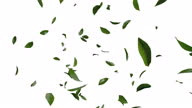 istock 3D animation of green tea leaves flow with alpha layer 1302049123