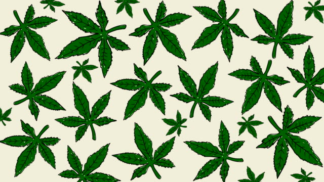 animation of hand drawn cannabis leaves. medical marijuana background - дикая растительность стоковые видео и кадры b-roll
