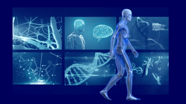 animation of human model walking man with mri scan screens - science research stock videos & royalty-free footage