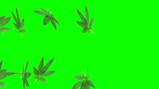 vídeos de stock, filmes e b-roll de animação da folha da marijuana na tela verde - erva