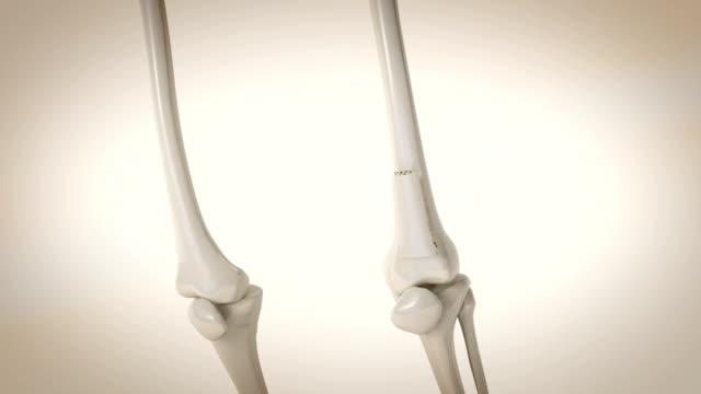 3d cg animation av osteoporos process i ben ben - ben bildbanksvideor och videomaterial från bakom kulisserna