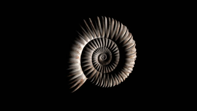 vídeos de stock e filmes b-roll de animation of prehistoric fossil ammonite rotating - loop - evolução