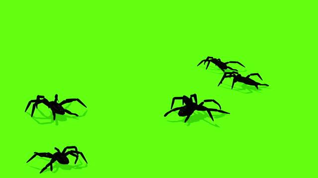 animering av spindlar på grön skärm läskiga kryper - spindel arachnid bildbanksvideor och videomaterial från bakom kulisserna