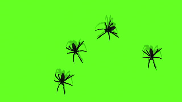 Animation Of Spiders On Green Screen Creepy Crawling