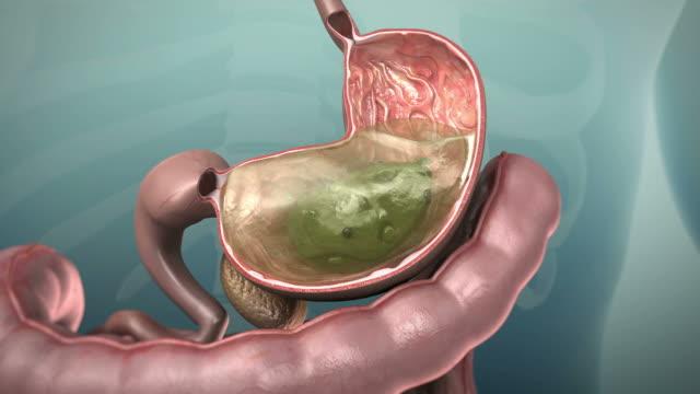 3 d animation der menschlichen gastrointestinal-tract oder gi-tract - bauch stock-videos und b-roll-filmmaterial