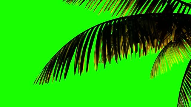 animation palm zweig und blätter im wind auf einem grünen hintergrund.  keying, grüner hintergrund-alphakanal - palme stock-videos und b-roll-filmmaterial