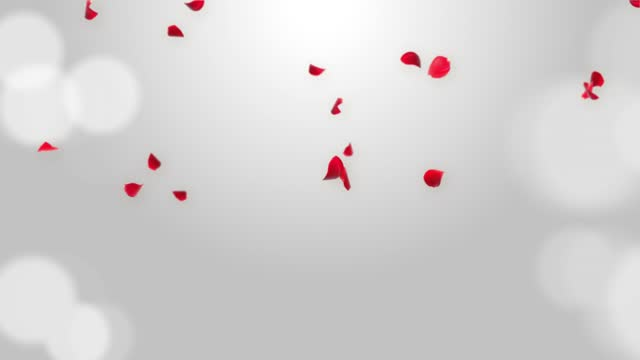 Anniversary Loop Background with falling Red rose petals 3D Green Screen loop Animation.
