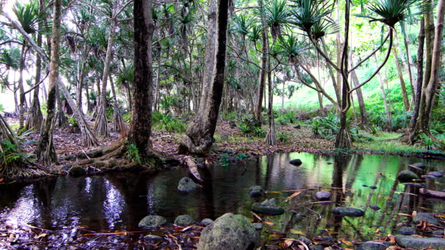 anse des cascades; pandanus trees- reunion island - reunion stock videos & royalty-free footage