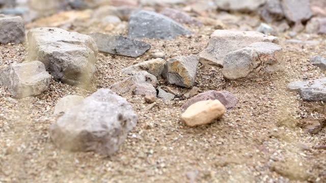 Ant Nest in the Desert Tilt Down camera tilts down on a close up shot of ants in desert terrain, surrounded by rocks and sand. heap stock videos & royalty-free footage