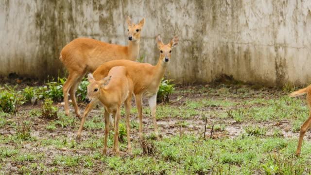 antelope animals in a group - madhya pradesh filmów i materiałów b-roll