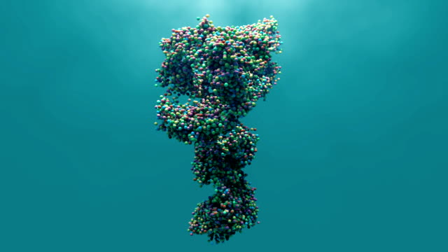 Antibody in motion