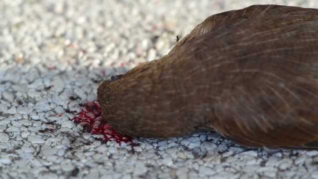 ants and the death bird video