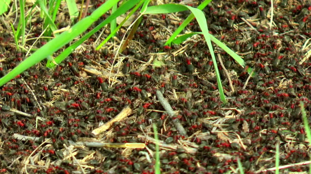 ants building an anthill