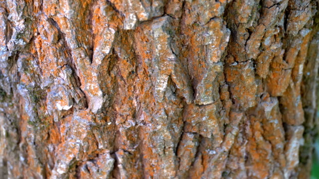 Ants Crawl along the Bark on a Tree Trunk Ants Crawl along the Bark on a Tree Trunk. Summer. Close-up. plant bark stock videos & royalty-free footage