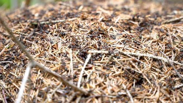 Ameisen im Wald – Video