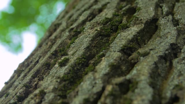 ants insects on the tree - sud est video stock e b–roll