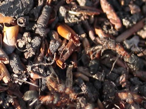 ants macro - arto inferiore animale video stock e b–roll