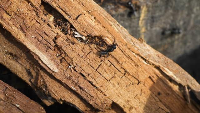 Ants on a tree, wild life video