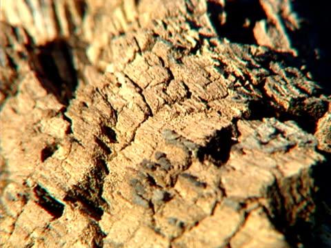 vídeos y material grabado en eventos de stock de ants en bark 01 - insecto himenóptero