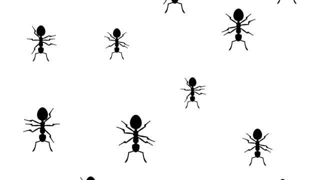 Ants running down video