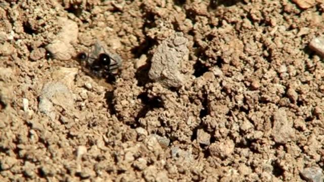 vídeos y material grabado en eventos de stock de ants - insecto himenóptero