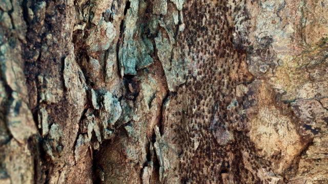 vidéos et rushes de fourmis marchant sur un arbre au sri lanka - prise avec un appareil mobile